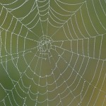 spinneweb_uitsnede